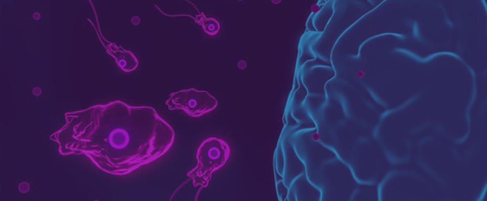 Infecção de bactéria de meningite atacando o cérebro